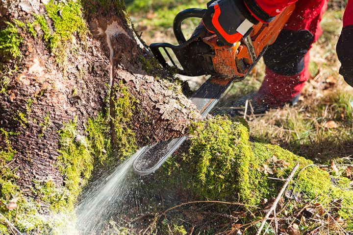 How To Avoid Tree Removal Scams